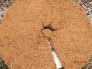Kokosfaser-Baumscheibe mit Einschnitten