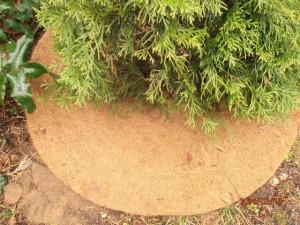 Kokosfaser-Baumscheibe unter Thuja